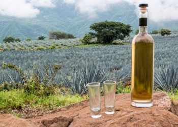 Know About Tequila Drinks