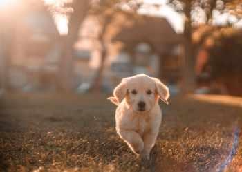 Mistakes to Avoid Training Dog